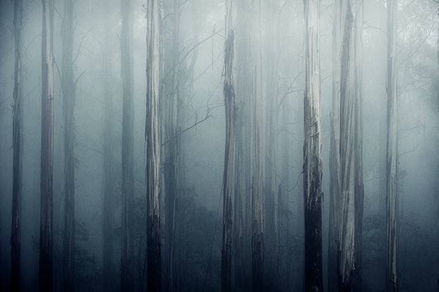 (CreativeWork) Speak for the trees Ed. 2 of 5 by Brent Lukey. Photograph. Shop online at Bluethumb.