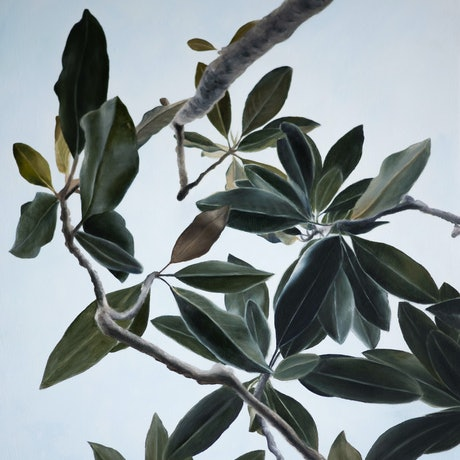 (CreativeWork) Fig Leaves in the Early Summer Evening by Sarah Park. Oil Paint. Shop online at Bluethumb.