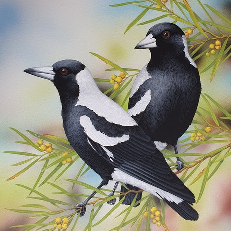 (CreativeWork) Australian Magpies by Lyn Cooke. Watercolour Paint. Shop online at Bluethumb.