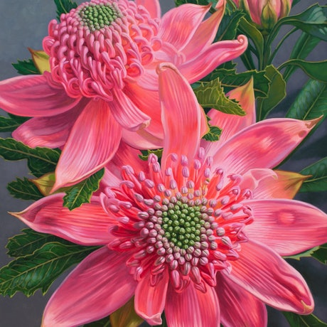 (CreativeWork) Pink Waratahs and Bud by Fiona Craig. Oil Paint. Shop online at Bluethumb.