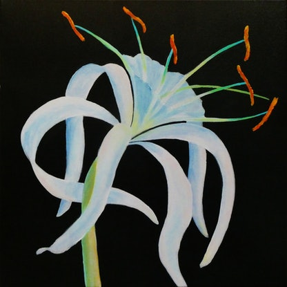 (CreativeWork) Spider Lilies of Summer by Clare Riddington Jones. Acrylic Paint. Shop online at Bluethumb.