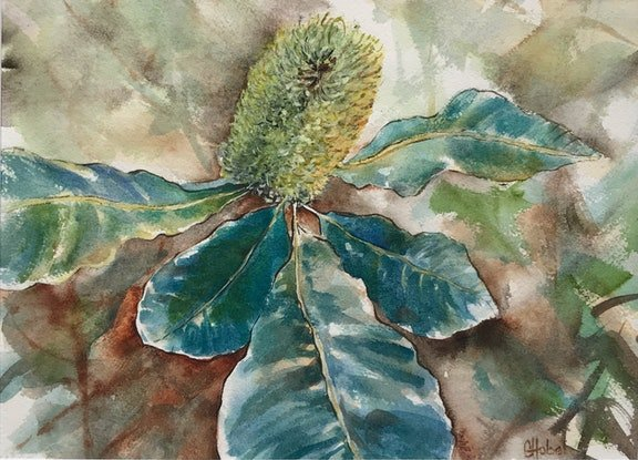 (CreativeWork) Banksia Flower Original Painting  by Chris Hobel. Watercolour Paint. Shop online at Bluethumb.