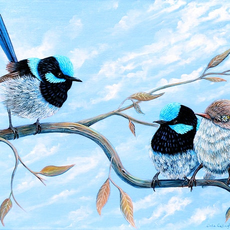 (CreativeWork) Fairy Wrens - The Ceremony by Linda Callaghan. Acrylic Paint. Shop online at Bluethumb.