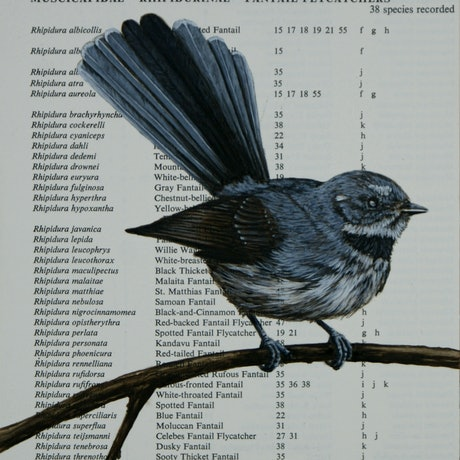 (CreativeWork) Grey Fantail on vintage (1978) page from 'A Checklist of Birds of the World' by Edward S. Gruson by Craig Williams. Acrylic Paint. Shop online at Bluethumb.