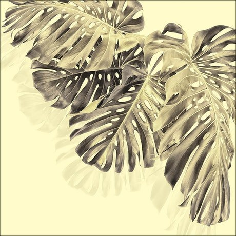 (CreativeWork) Monstera Group 4 - Pantone Yellow & Grey 2 Ed. 1 of 30 by ® Carmel Louise. Photograph. Shop online at Bluethumb.