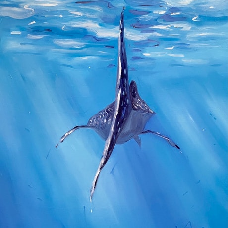(CreativeWork) Moving Past ~ Whale Sharks Ningaloo by Jo Meredith. Oil Paint. Shop online at Bluethumb.