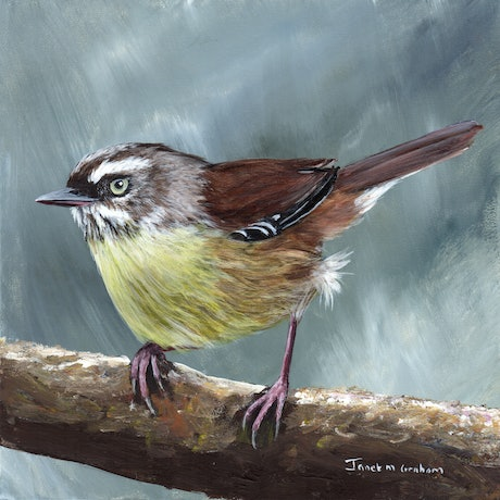 (CreativeWork) White Browed Scrubwren by Janet Graham. Acrylic Paint. Shop online at Bluethumb.