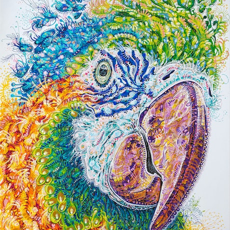 (CreativeWork) Maisie Macaw by Tina Dinte. Acrylic Paint. Shop online at Bluethumb.