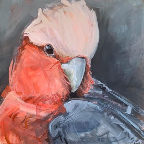 (CreativeWork) Mondays Galah by Rebecca Hill. Mixed Media. Shop online at Bluethumb.