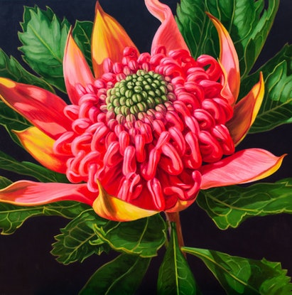 (CreativeWork) Pink Waratah Beauty, 4 by Fiona Craig. Oil Paint. Shop online at Bluethumb.