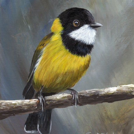 (CreativeWork) Golden Whistler by Janet Graham. Acrylic Paint. Shop online at Bluethumb.