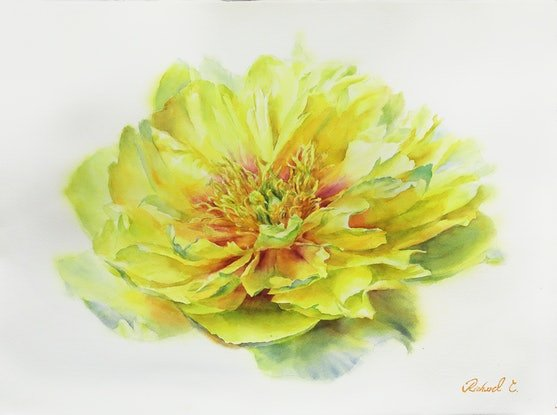 (CreativeWork) A DELICATE PEONY-3 by Richard(Tiejun) Chao. Watercolour Paint. Shop online at Bluethumb.