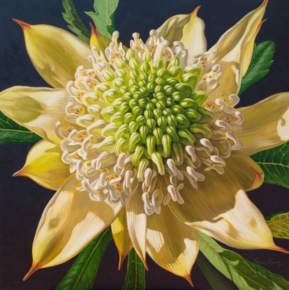 (CreativeWork) White Waratah on Sepia, 1 by Fiona Craig. Oil Paint. Shop online at Bluethumb.