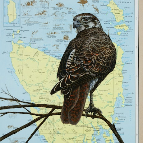 (CreativeWork) Brown Falcon on vintage (1972) page from the Australia and New Zealand Complete World Atlas by Craig Williams. Acrylic Paint. Shop online at Bluethumb.