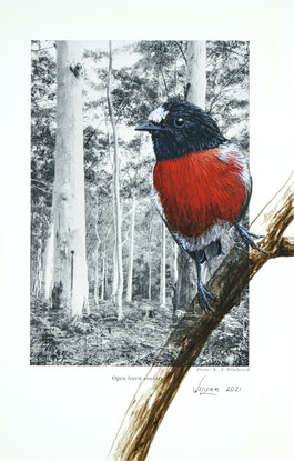 (CreativeWork) Scarlet Robin on vintage (1969) page from 'What Bird is That?' by Neville W. Cayley by Craig Williams. Acrylic Paint. Shop online at Bluethumb.