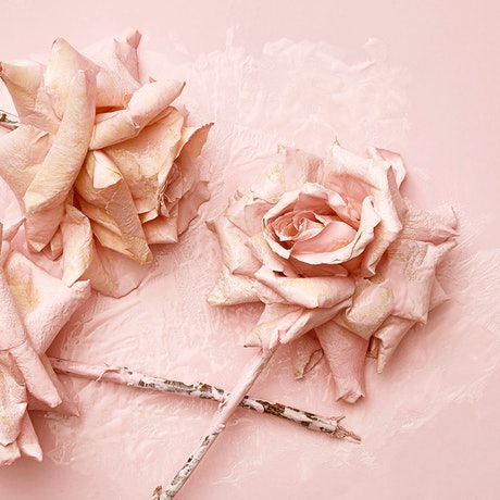 (CreativeWork) Pretty In Pink 6. Ed. 6 of 10 by Benjamin Cole. Photograph. Shop online at Bluethumb.
