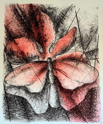 (CreativeWork) Butterfly beauty Ed. 16 of 16 by Mojgan Ostovan. Print. Shop online at Bluethumb.