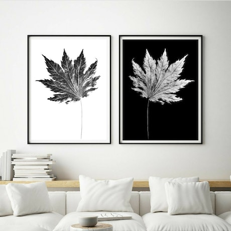 (CreativeWork) Liquidambar Leaves Diptych ~ Black and White  Ed. 1 of 50 by Nadia Culph. Photograph. Shop online at Bluethumb.
