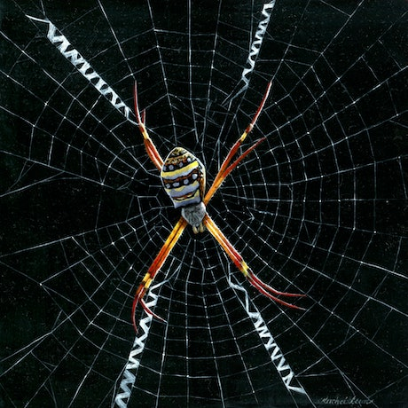 (CreativeWork) St Andrew's Cross Spider by Rachel Lewis. Oil Paint. Shop online at Bluethumb.