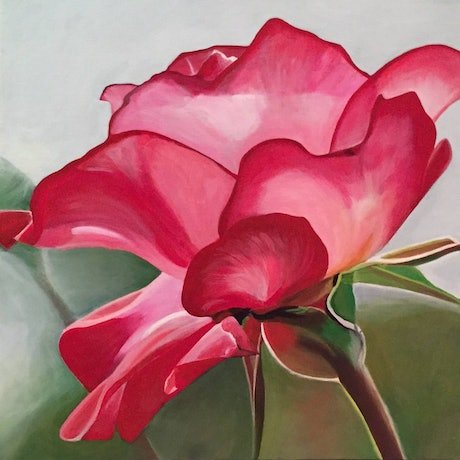 (CreativeWork) Rose in sunlight by Jenny McGrath. Acrylic Paint. Shop online at Bluethumb.