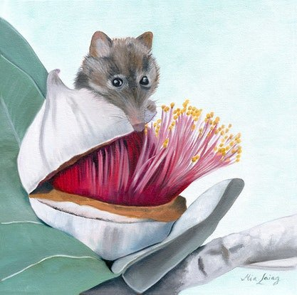 (CreativeWork) Sweet As Honey  - stretched canvas print ready to hang Honey Possum by Mia Laing. Print. Shop online at Bluethumb.