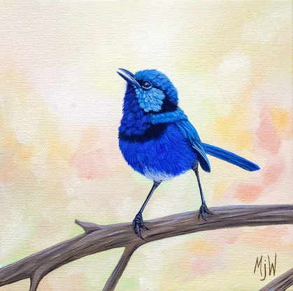 (CreativeWork) Fairy Wren  by Michelle Williamson. Oil Paint. Shop online at Bluethumb.
