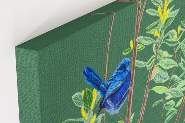 (CreativeWork) Morning Meander - Blue Fairy Wren by Michelle Williamson. Oil Paint. Shop online at Bluethumb.