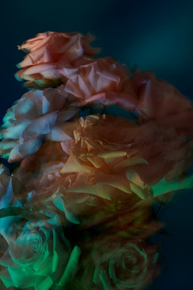 (CreativeWork) Pre-Release, 'Silent Bloom' Ed. 2 of 5 by Benjamin Cole. Photograph. Shop online at Bluethumb.