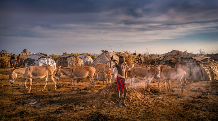 (CreativeWork) Dassanech  Boy with Donkeys - Omo Valley Ethiopia Ed. 1 of 20 by Karen Waller. Photograph. Shop online at Bluethumb.