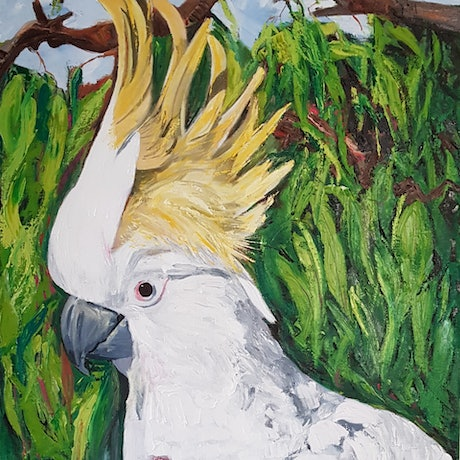 (CreativeWork) Cockatoo and Grevillia by Rhonda Turnbull. Oil Paint. Shop online at Bluethumb.