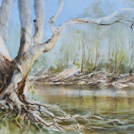 (CreativeWork) River Gum on the Murray  by Anica Amphlett. Watercolour Paint. Shop online at Bluethumb.