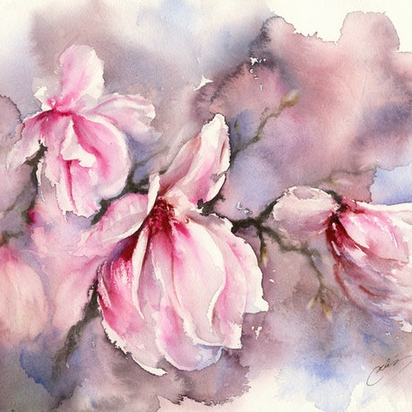 (CreativeWork) Pink Magnolias by Cecilia Xiao. Watercolour Paint. Shop online at Bluethumb.