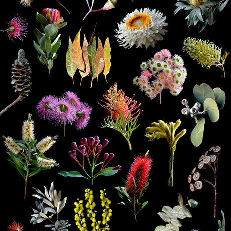 (CreativeWork) Australian Nature Collage Ed. 1 of 50 by Nadia Culph. Photograph. Shop online at Bluethumb.