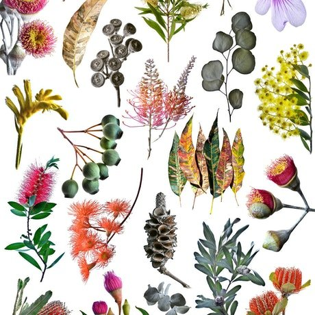 (CreativeWork) Australian Nature Collage the Sequel  Ed. 1 of 50 by Nadia Culph. Photograph. Shop online at Bluethumb.