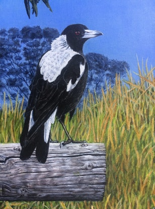 One magpie on a wooden post with gum trees and grass