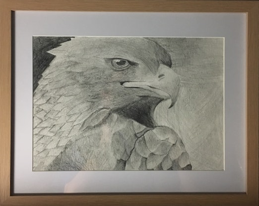 (CreativeWork) Bird of prey by Coco Tokyo. Drawings. Shop online at Bluethumb.