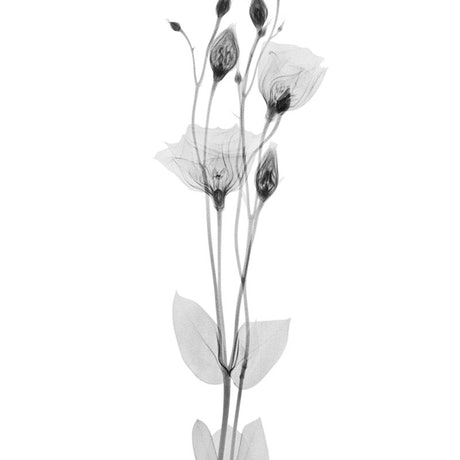 (CreativeWork) X-Ray 2 Ed. 1 of 10 by alex buckingham. Photograph. Shop online at Bluethumb.