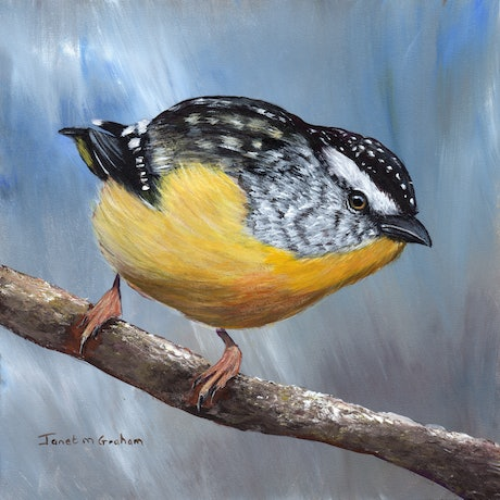 (CreativeWork) Spotted Pardalote  by Janet Graham. Acrylic Paint. Shop online at Bluethumb.