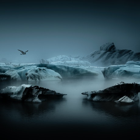 (CreativeWork) Flight over the Ice. Ed. 1 of 25 by Carmel Cook. Photograph. Shop online at Bluethumb.