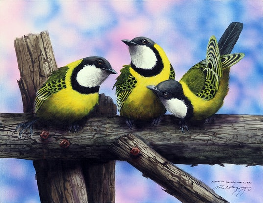 (CreativeWork) AUSTRALIAN GOLDEN WHISTLERS by Paul Margocsy. Mixed Media. Shop online at Bluethumb.