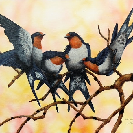 (CreativeWork) AUSTRALIAN WELCOME SWALLOWS by Paul Margocsy. Mixed Media. Shop online at Bluethumb.