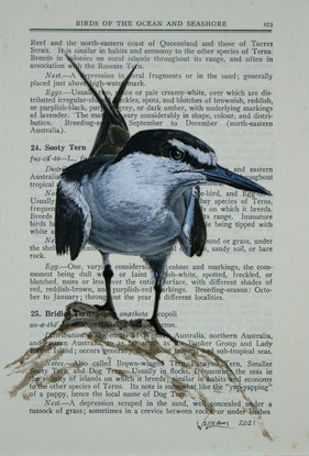 (CreativeWork) Bridled Tern on vintage (1948) page from 'What Bird is That?' by Neville W. Cayley by Craig Williams. Acrylic Paint. Shop online at Bluethumb.