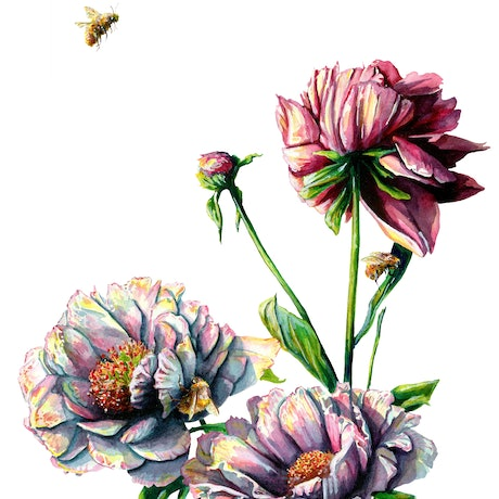 (CreativeWork) Bees and Flowers by Martha Iserman. Watercolour Paint. Shop online at Bluethumb.