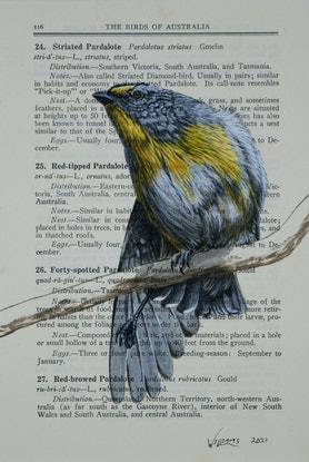 (CreativeWork) Striated Pardalote on vintage (1948) page from 'What Bird is That?' by Neville W. Cayley by Craig Williams. Acrylic Paint. Shop online at Bluethumb.