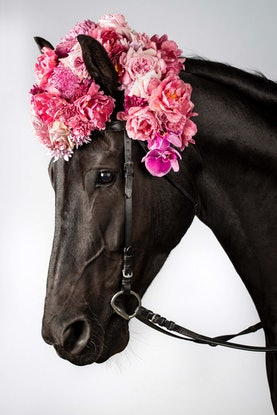 (CreativeWork) Oscar Pink Horse  Ed. 3 of 20 by GRACE COSTA. Photograph. Shop online at Bluethumb.