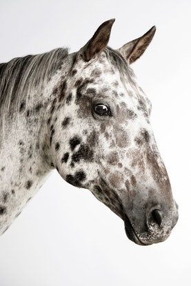(CreativeWork) Brave Horse Ed. 2 of 20 by GRACE COSTA. Photograph. Shop online at Bluethumb.