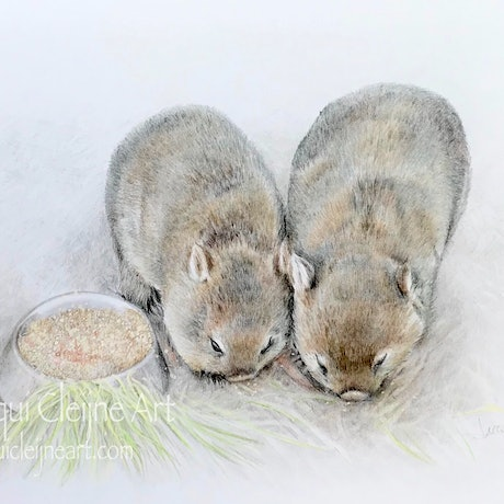(CreativeWork) Wombat Love by Jacqui Cleijne. Drawings. Shop online at Bluethumb.