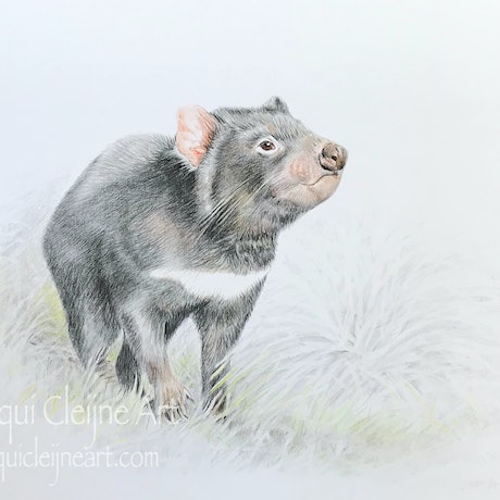 (CreativeWork) Tassie Devil in the Grass by Jacqui Cleijne. Drawings. Shop online at Bluethumb.