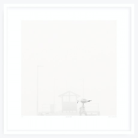 (CreativeWork) Never Far Ed. 1 of 11 by Liza Clements. Photograph. Shop online at Bluethumb.