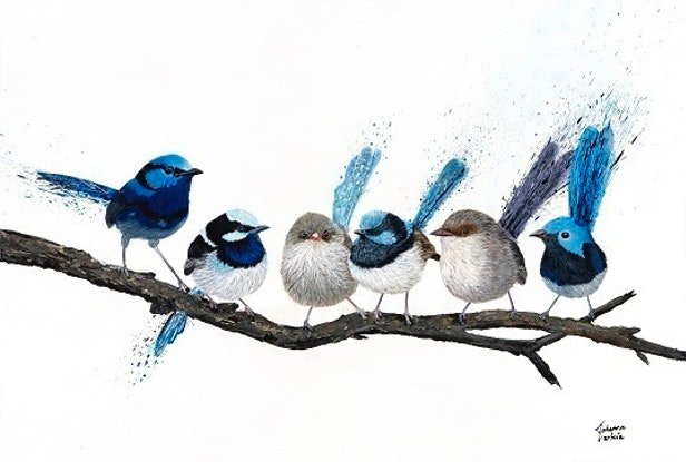 (CreativeWork) Birds of a Feather - 6 Pretty Little Wrens Ed. 11 of 100 by Johanna Larkin. Reproduction Print. Shop online at Bluethumb.